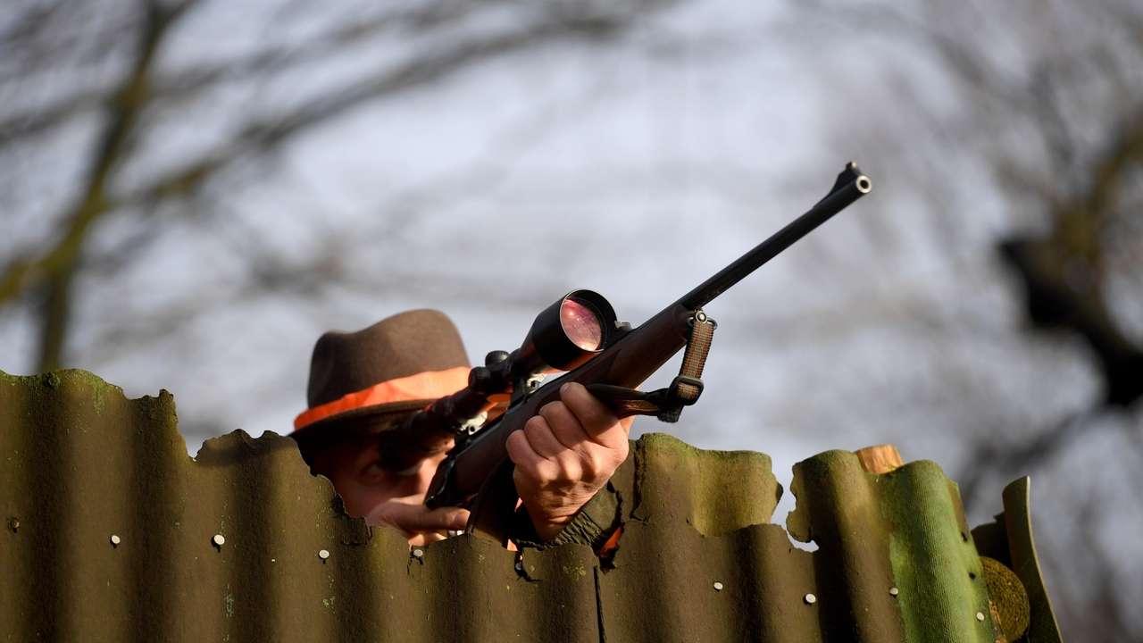 Am Vormittag hat ein Jäger den aggressiven Rehbock erschossen.