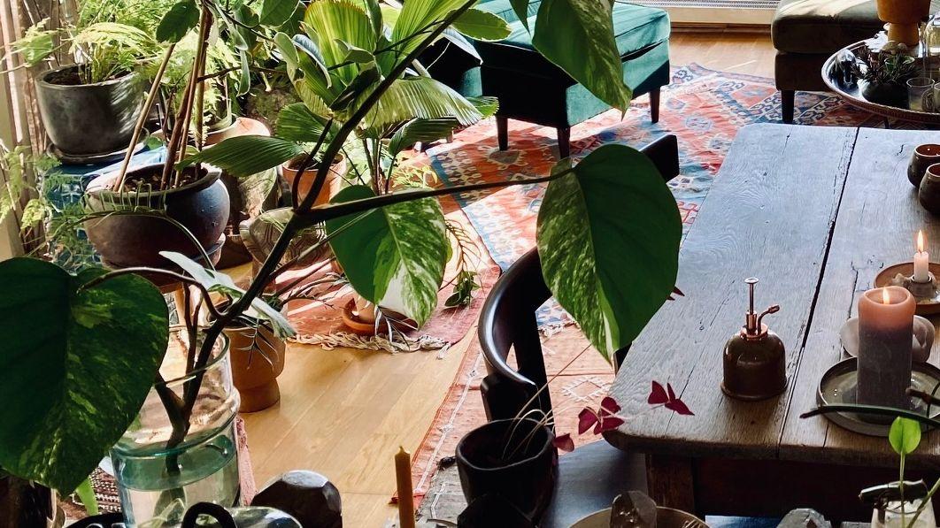 Eine Zimmerpflanze in einem Wohnzimmer