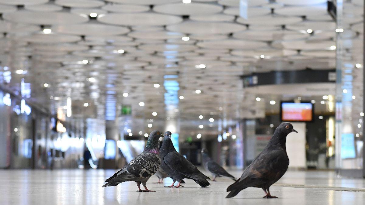 Tauben in der geschlossenen Münchner Stachuspassage