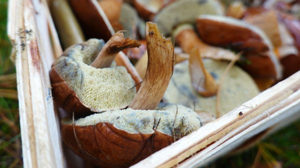 Pilze in einem Korb