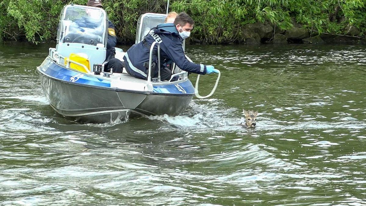 Ein Reh schwimmt im Wasser, ein Polizeiboot treibt daneben.