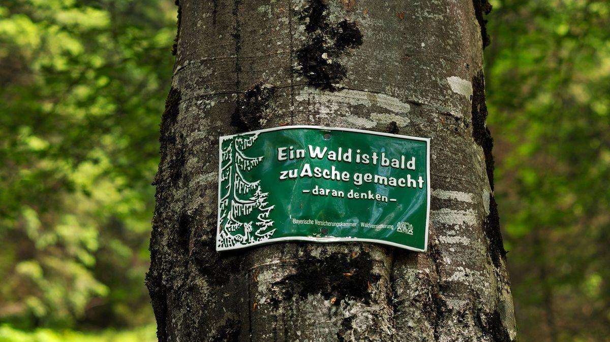 """Ein Baum mit einer Plakette und der Aufschrift """"Ein Wald ist bald zu Asche gemacht""""."""