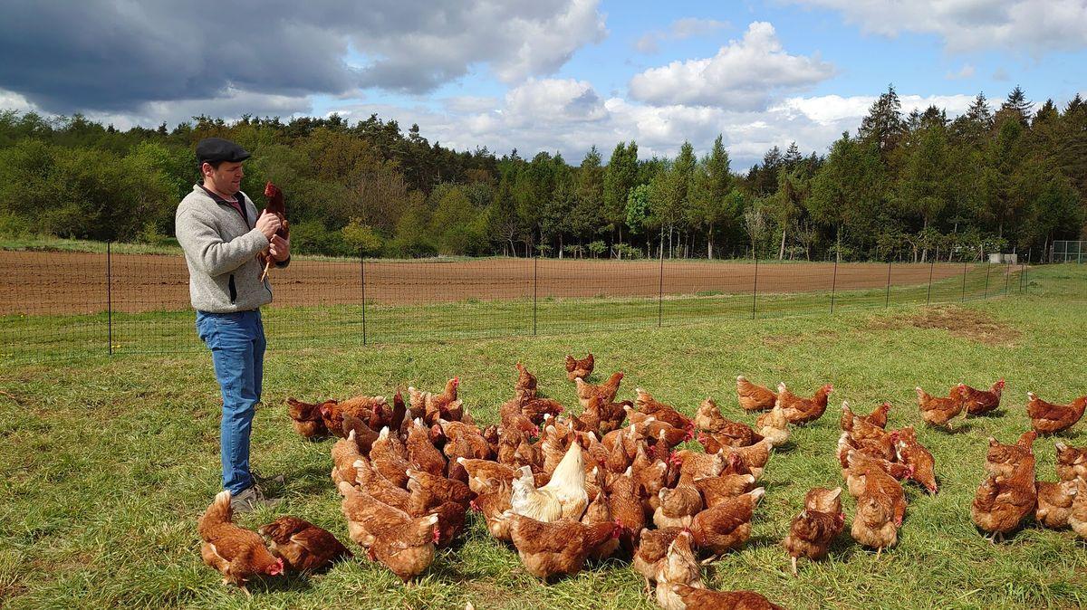 Stephen Wertsch steht auf einer Wiese, seine Hühnerherde pickt vor ihm im Gras