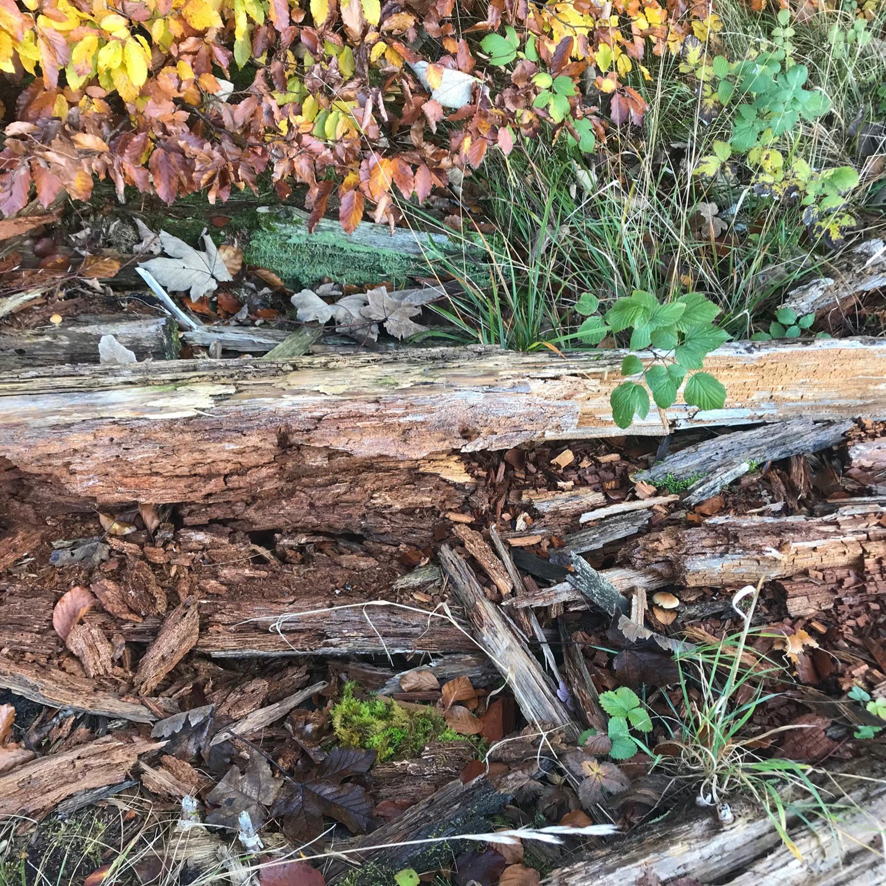 Totholz - Alte Bäume voller Leben
