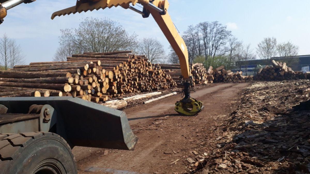 Baumstämme im Holzwerk Haidt im Landkreis Kitzingen.