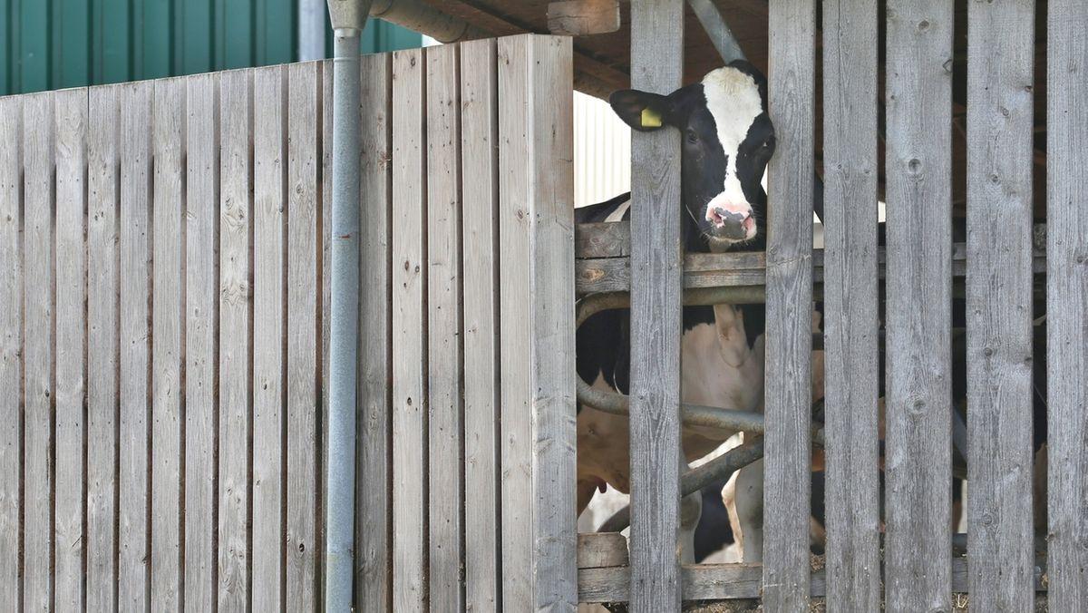 Was steckt hinter dem Allgäuer Tierschutz-Skandal?