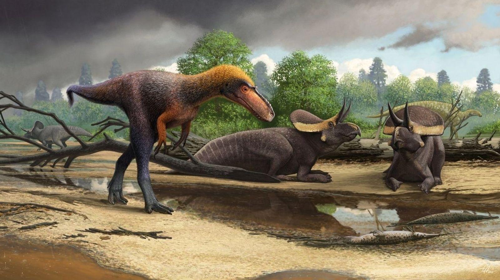 Früher Verwandter des T. rex entdeckt – Suskityrannus hazelae