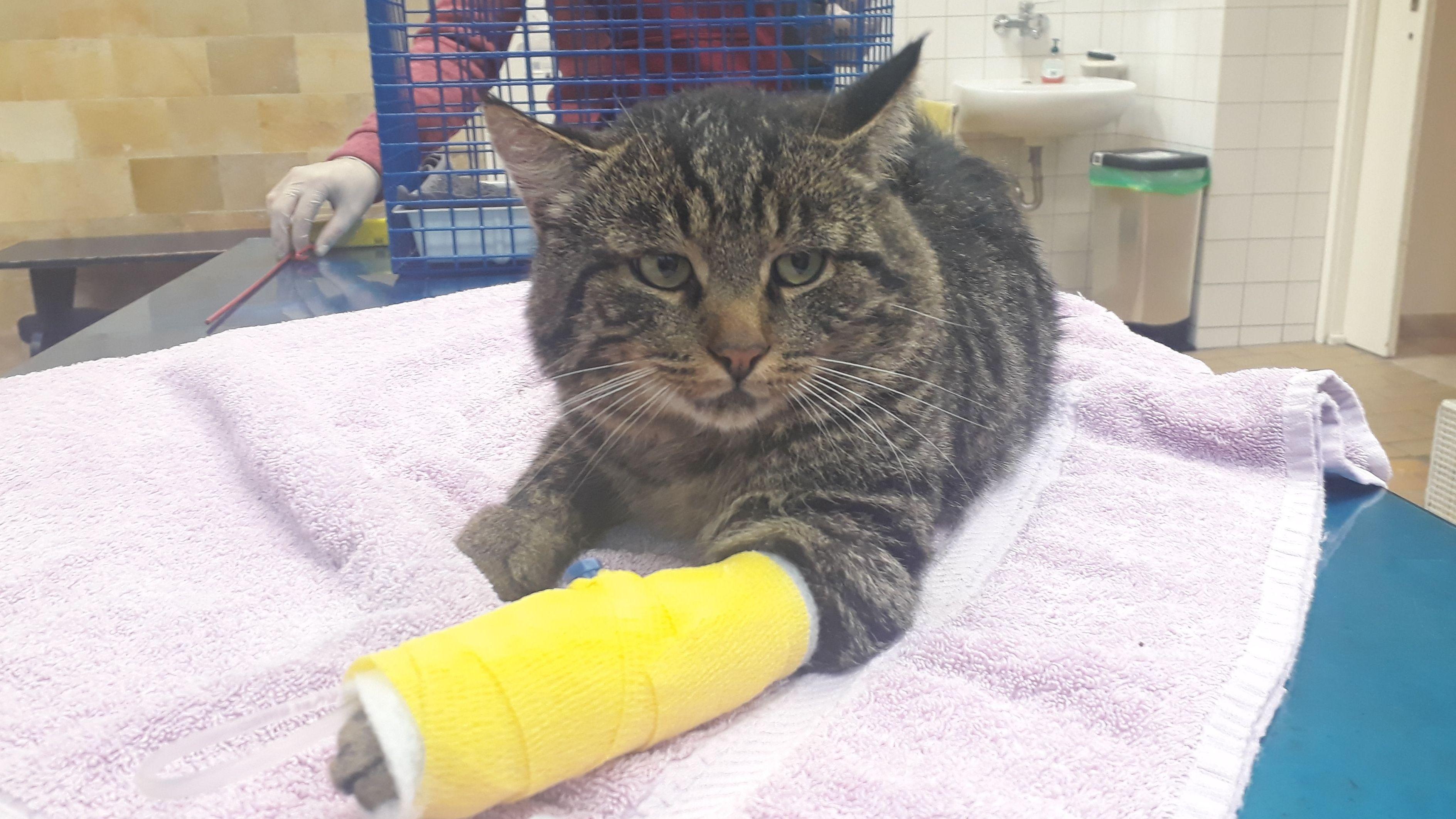 Die Pfote der Katze wurde in der Schlagfalle gequetscht