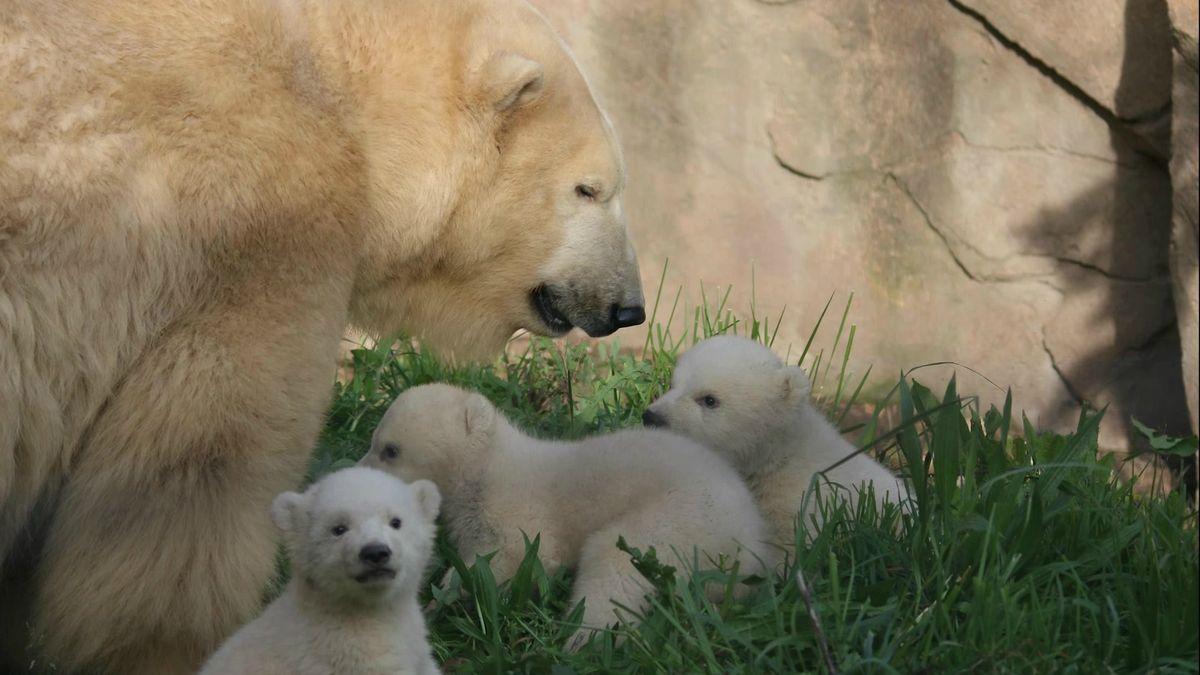 Eisbärin Flocke: Namen der Babys stehen fest