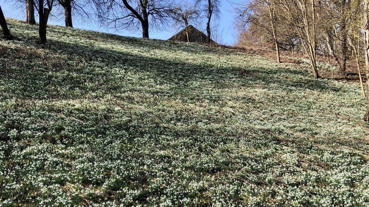 Schneeglöckchenwiese in Poldering