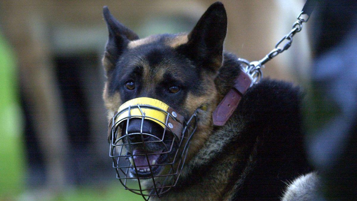 Symbolbild: Schäferhund mit Maulkorb