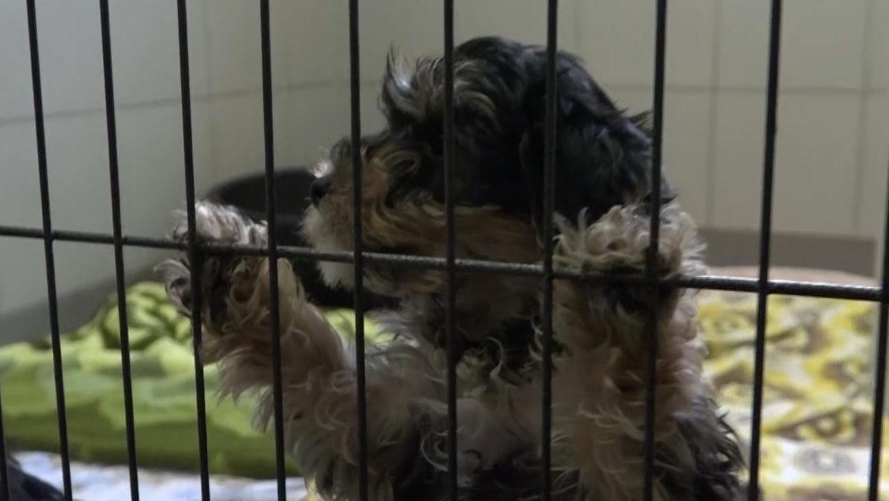Hundewelpe im Tierheim