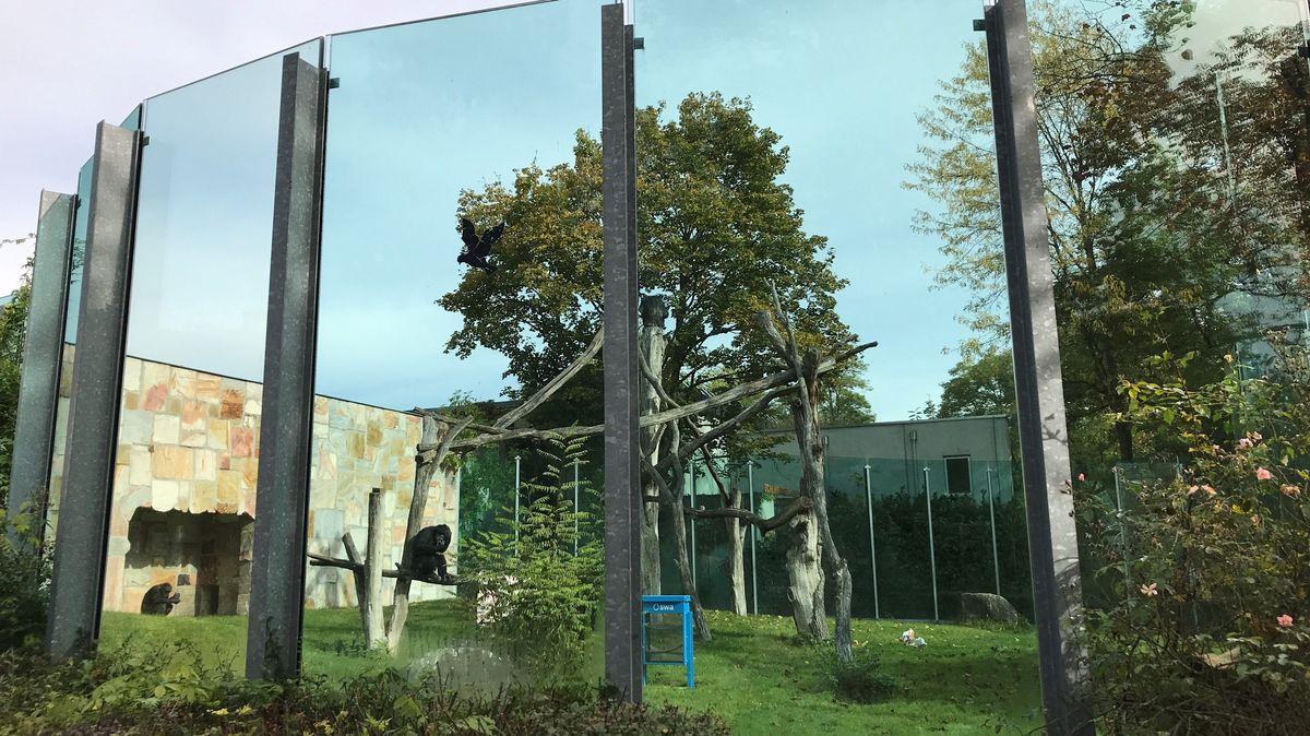 Außengehege der Schimpansen im Zoo Augsburg