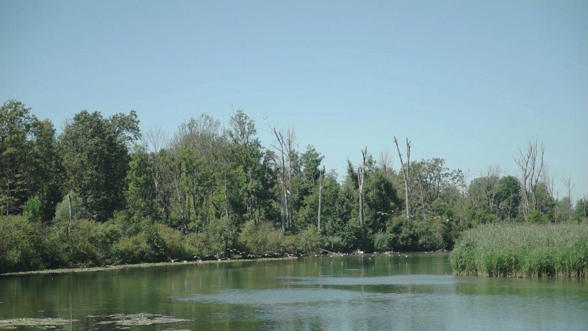 Graugänse fliegen über einen Altwasser-Arm im Mündungs-Delta der Isar