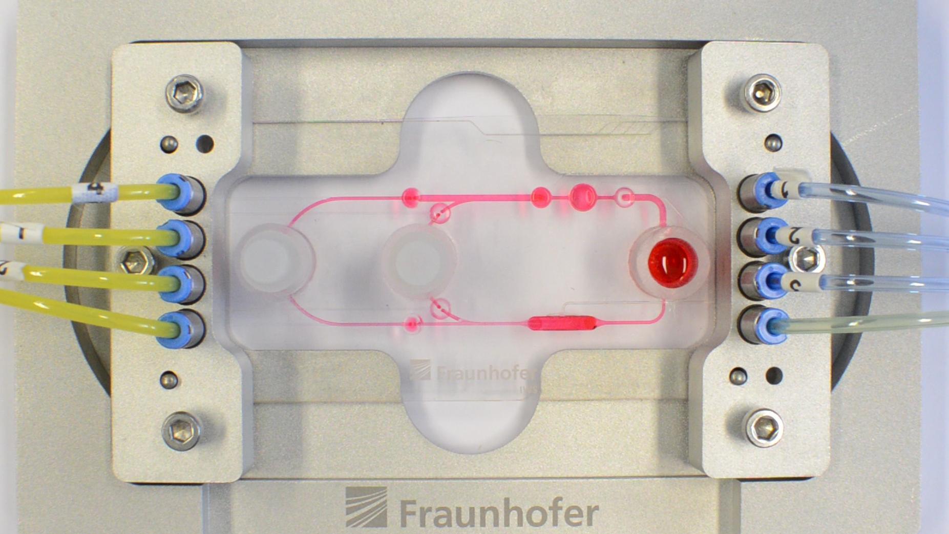 Multiorgan-Chip: Eine Platte aus Kunststoffschichten mit winzigen Kammern und Kanälen