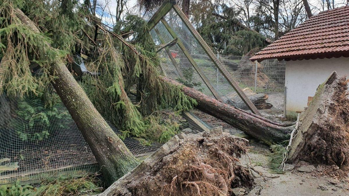 Entwurzelte Bäume liegen auf einem der zerstörten Vogelkäfige im Vogelpark in Ortenburg