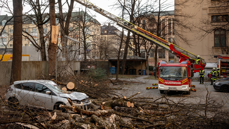 Ein von umgestürztem Baum in München schwer beschädigtes Auto