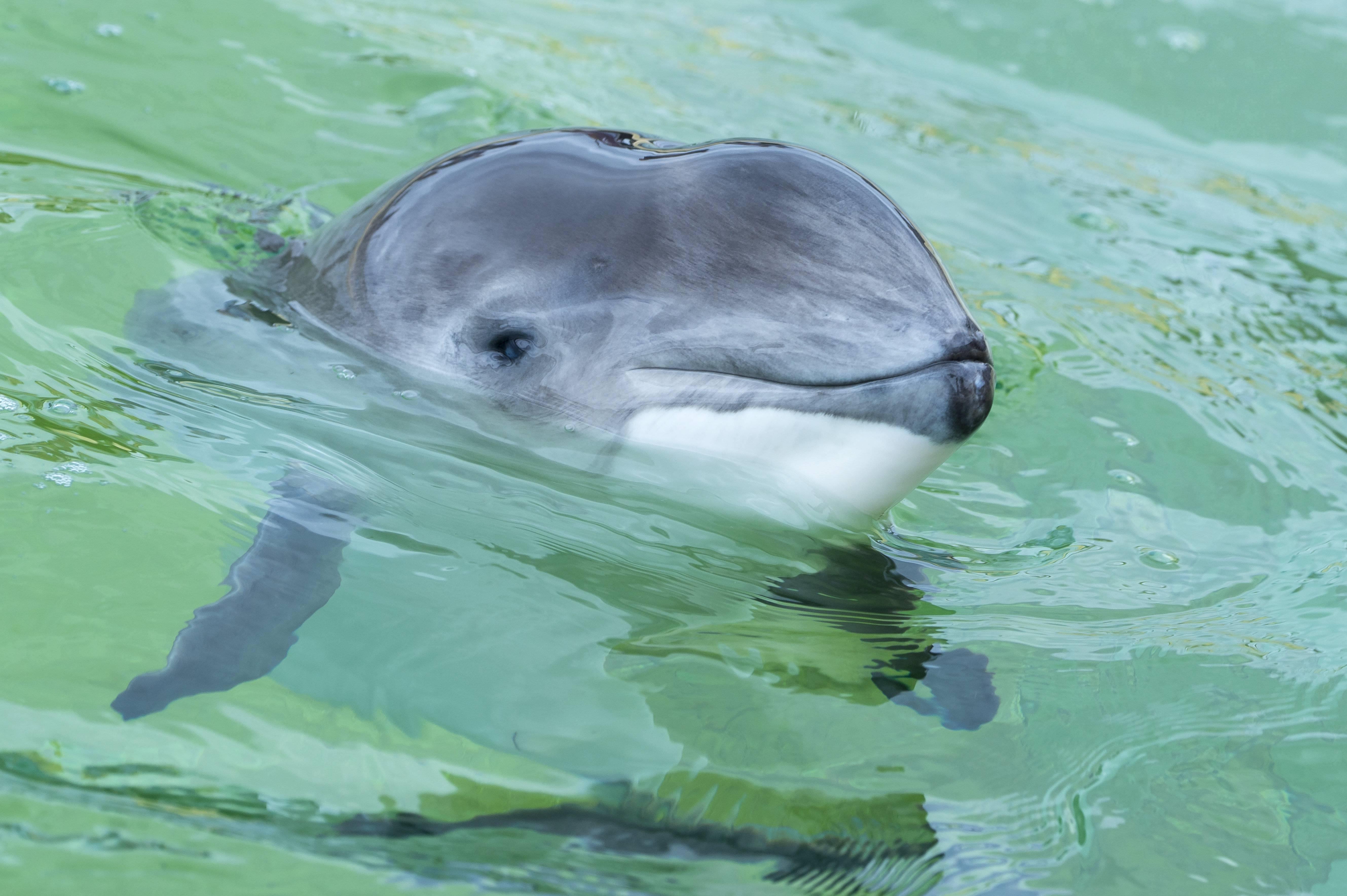 Umwelt - 18 tote Schweinswale nach Minensprengung in der Ostsee