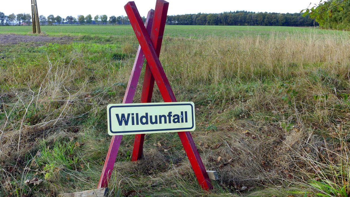 Symbolbild Wildunfall