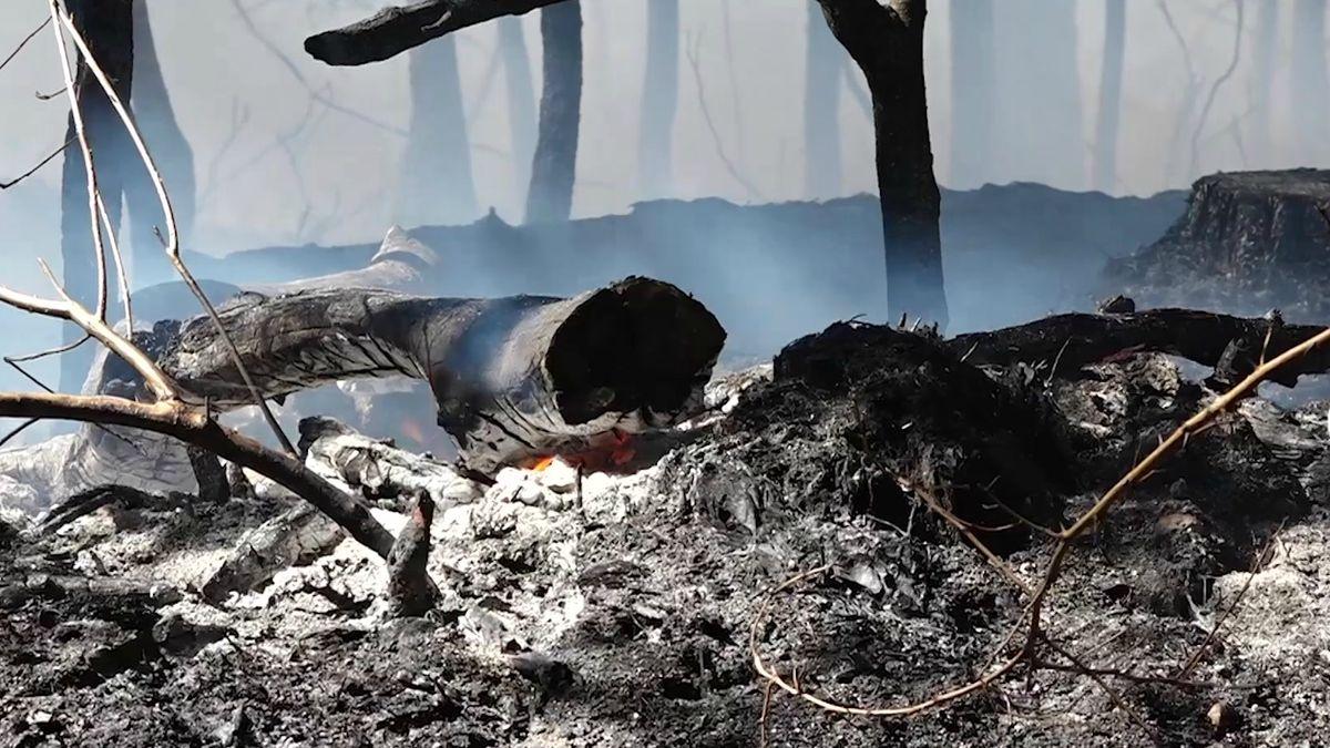Waldbrand bei Feucht