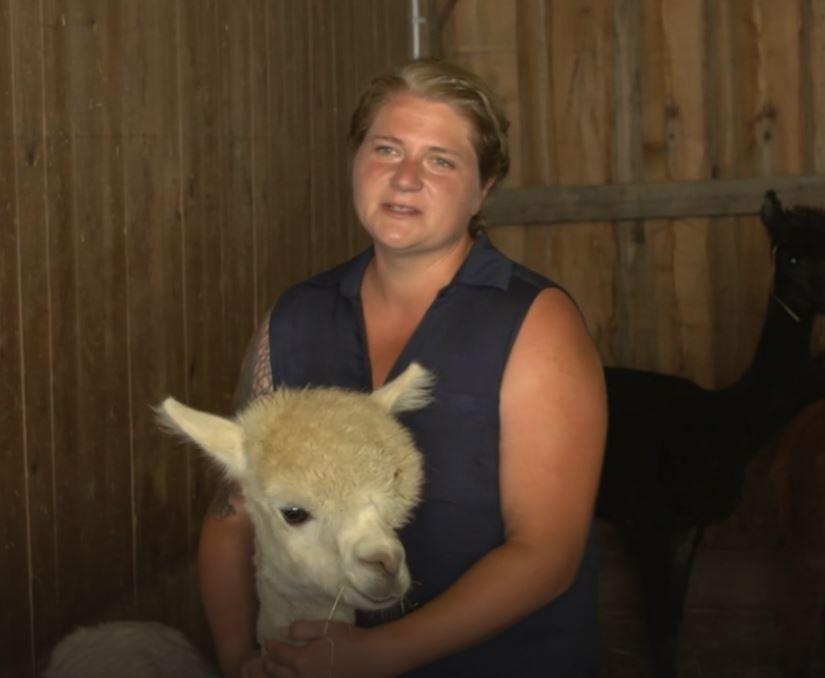 Alpakas auf dem Erlebnisbauernhof