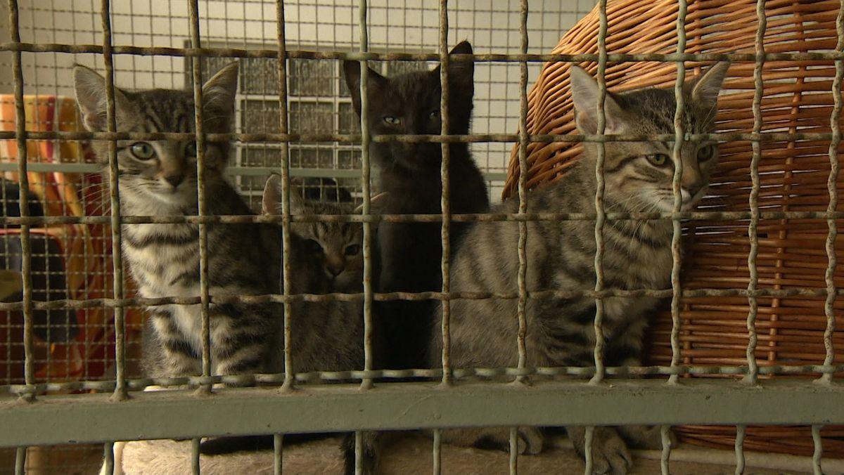 Katzen blicken aus durch ein Gitterfenster ins Freie.
