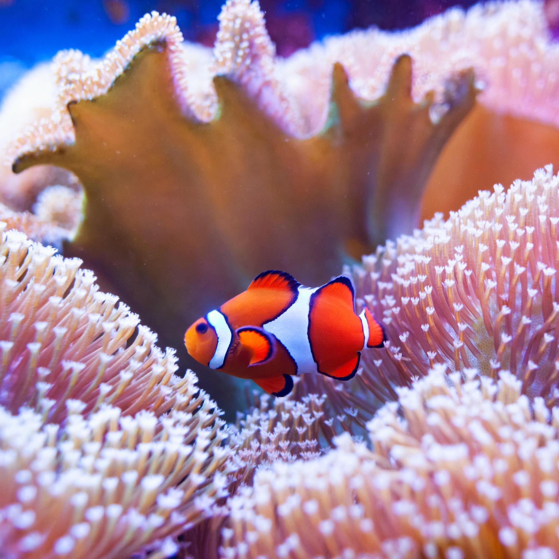 Korallen - das große Sterben