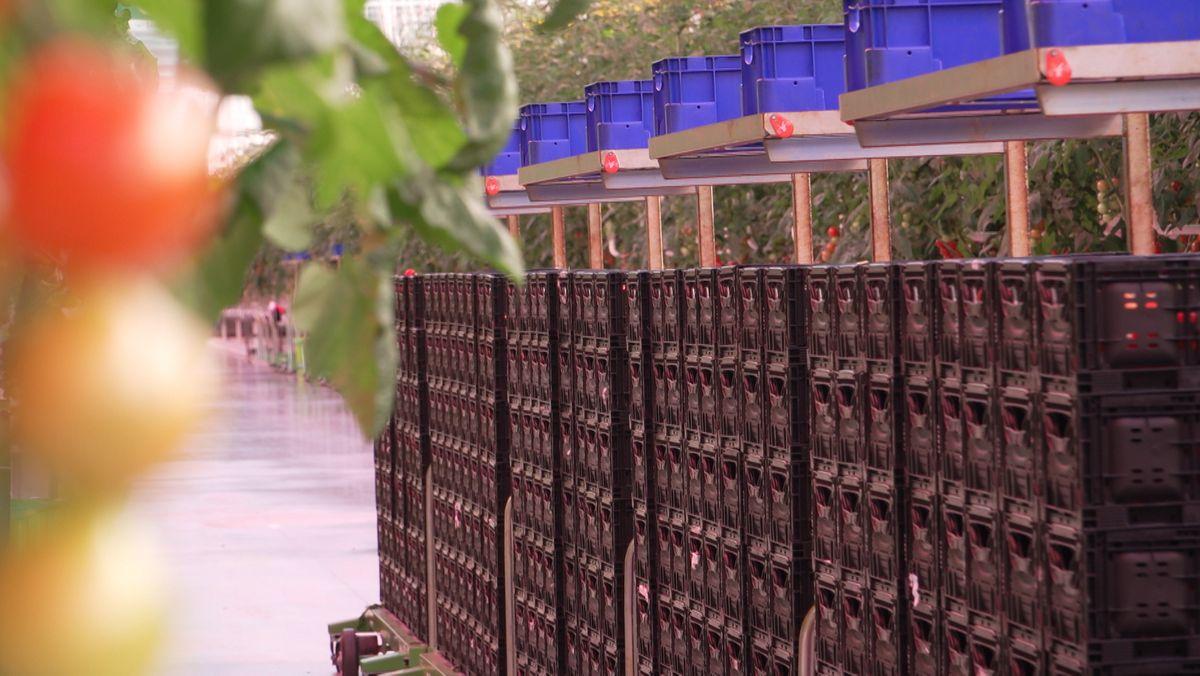 Kistenstapel für die Ernte