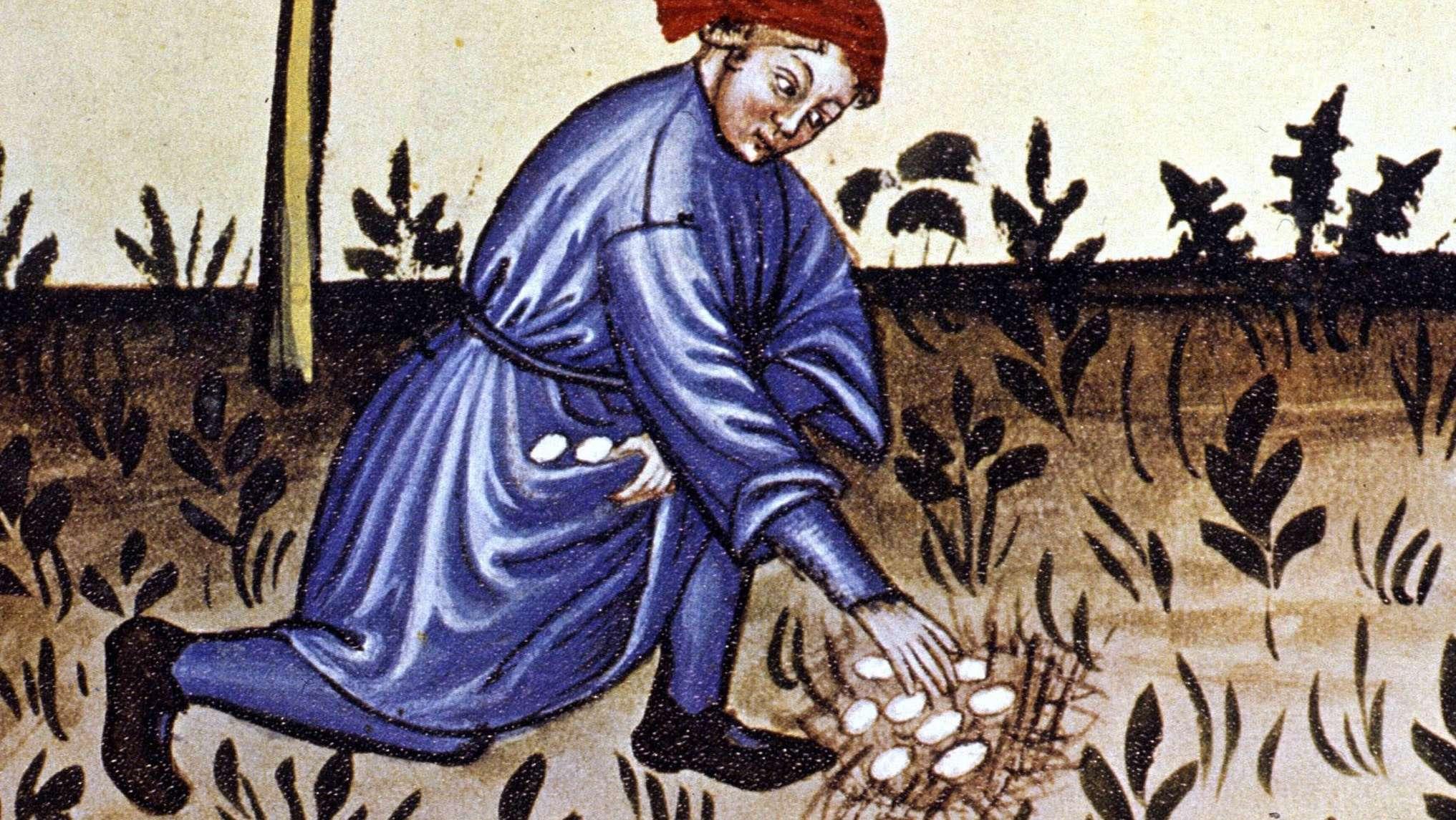 Im Mittelalter gab es die Zinseier: Eier waren Zahlungsmittel.