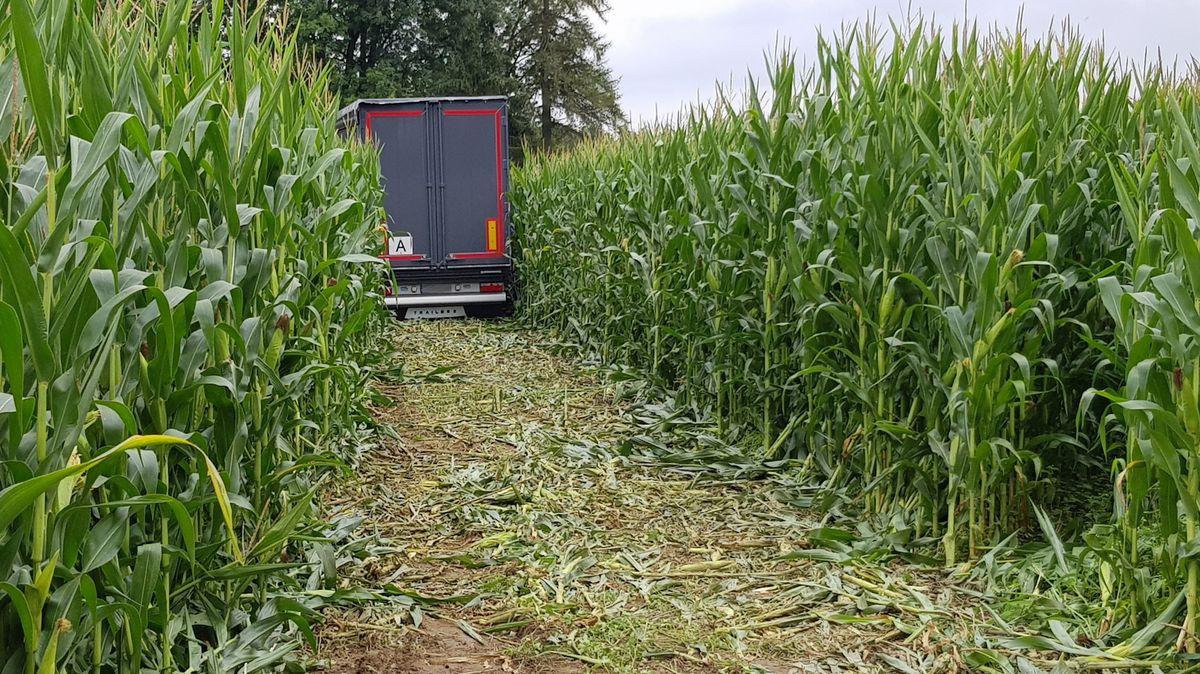 Der Lkw ist erst nach mehreren Metern im Feld zum Stehen gekommen.