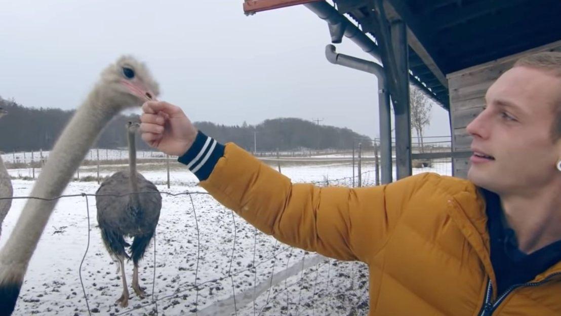 Ausschnitt aus einem Überpfalz-Video: Daniel führt eine Straußenfarm.