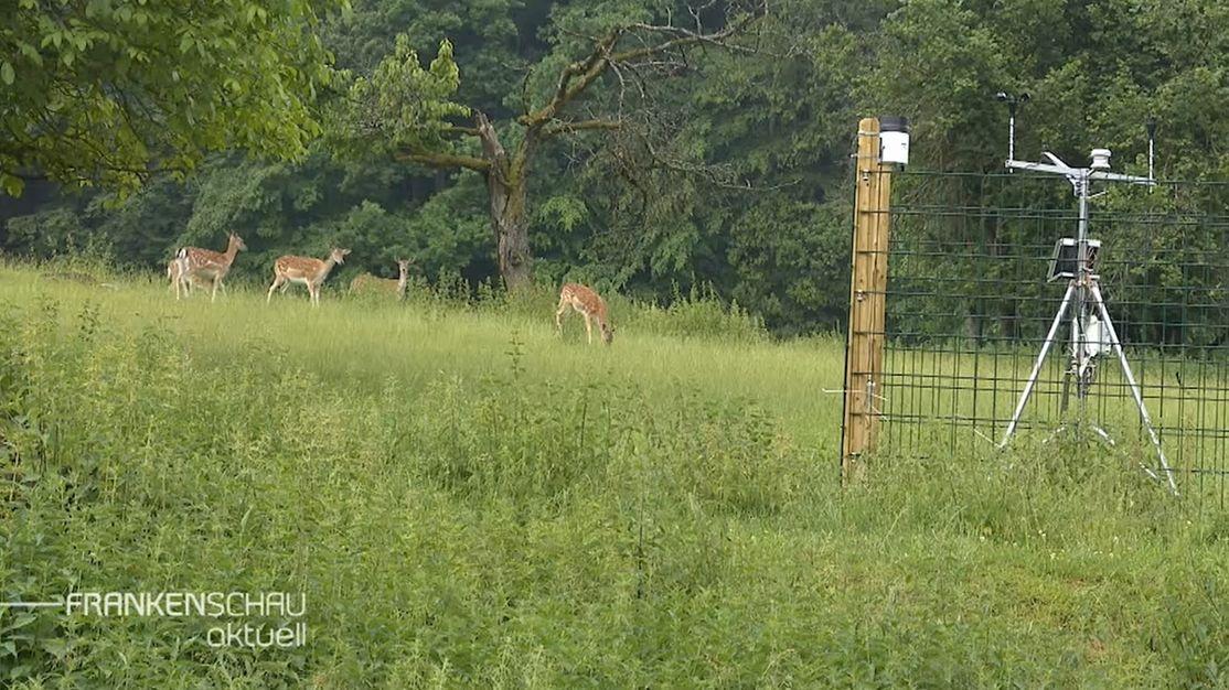 Neue Klimastation im Wildpark Hundshaupten
