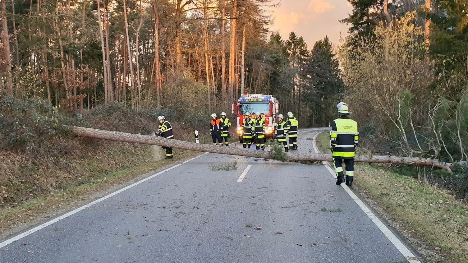 Erste umgestürzte Bäume auf einer Straße bei Mamming (Lkr. Dingolfing-Landau)