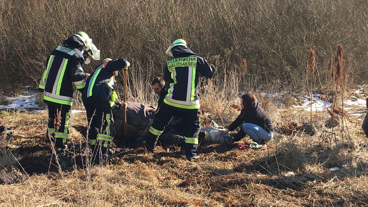 Zuerst hatten die Feuerwehrleute versucht, des eingesunkene Bein mit Schaufeln freizulegen.
