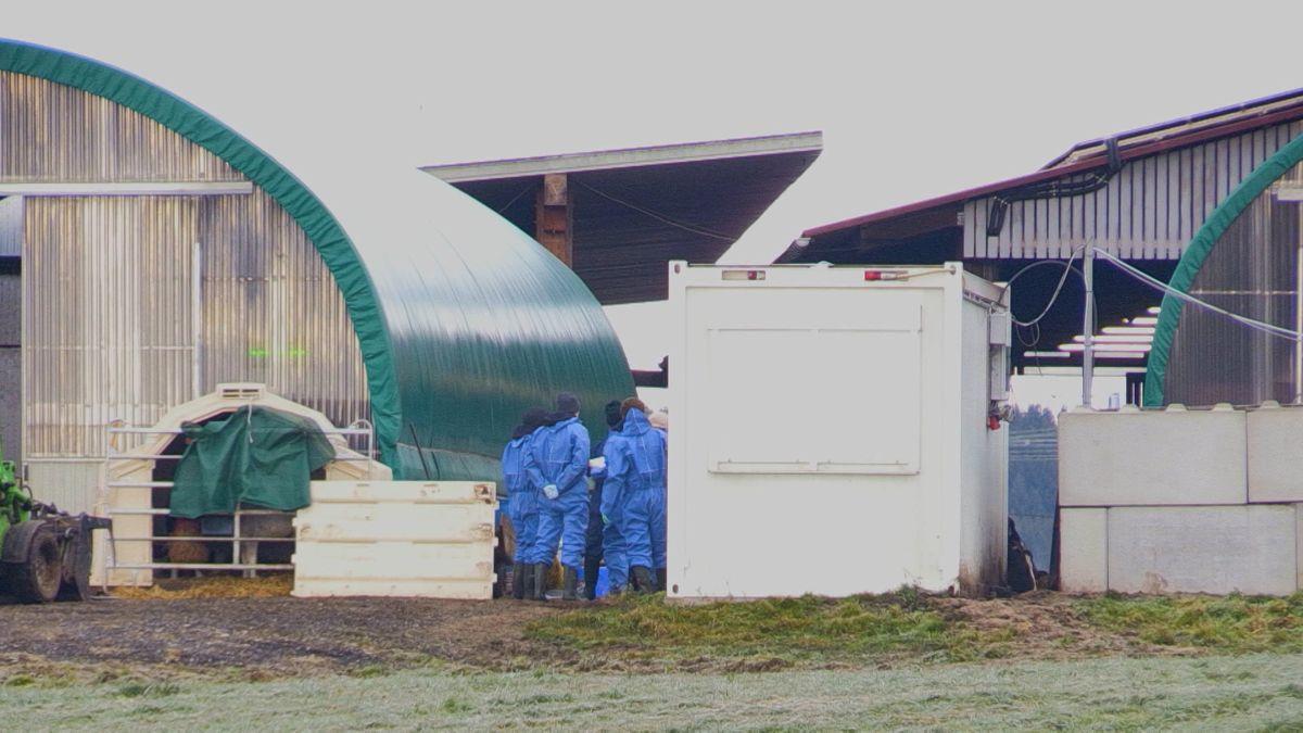 Kontrollen bei Rinderbetrieb in Dietmannsried