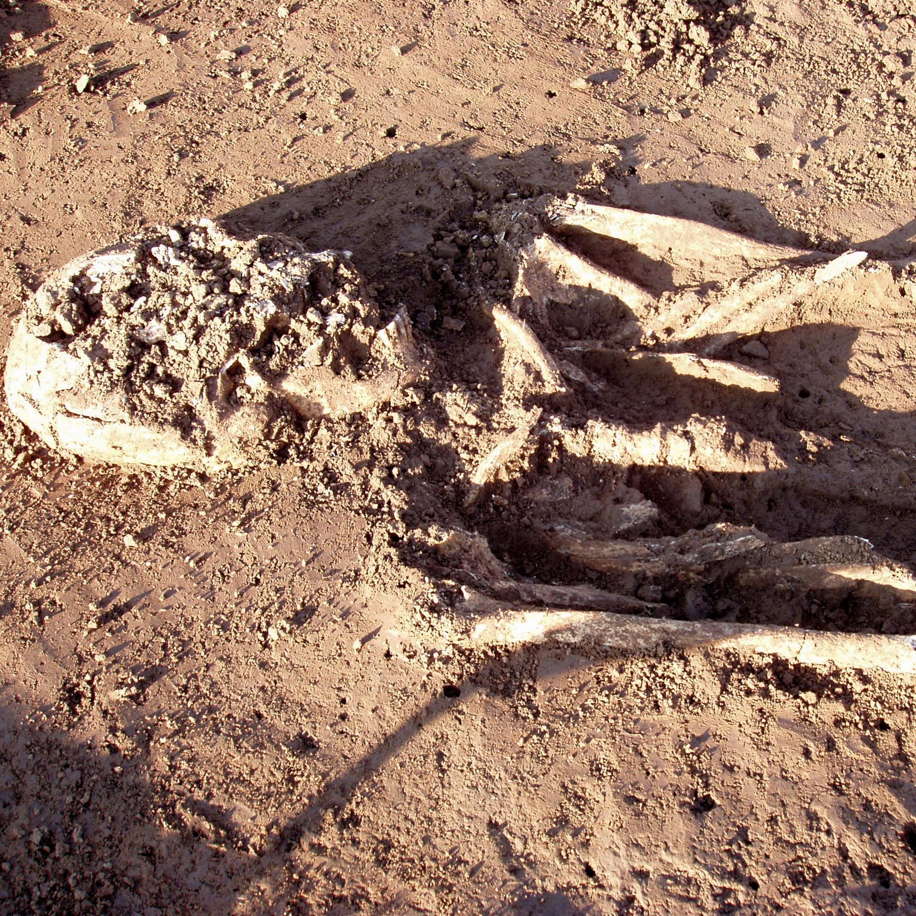 Herkunft der Bajuwaren - Neues zu einem alten Rätsel