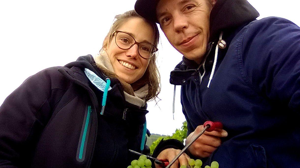 Christina Molitor und Hubertus Dötsch bei der Weinlese