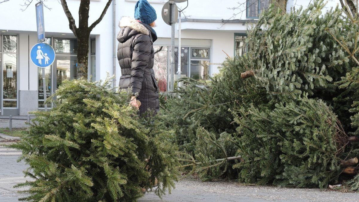 Frau zieht einen Tannenbaum zu einem Haufen entsorgter Tannenbäume.