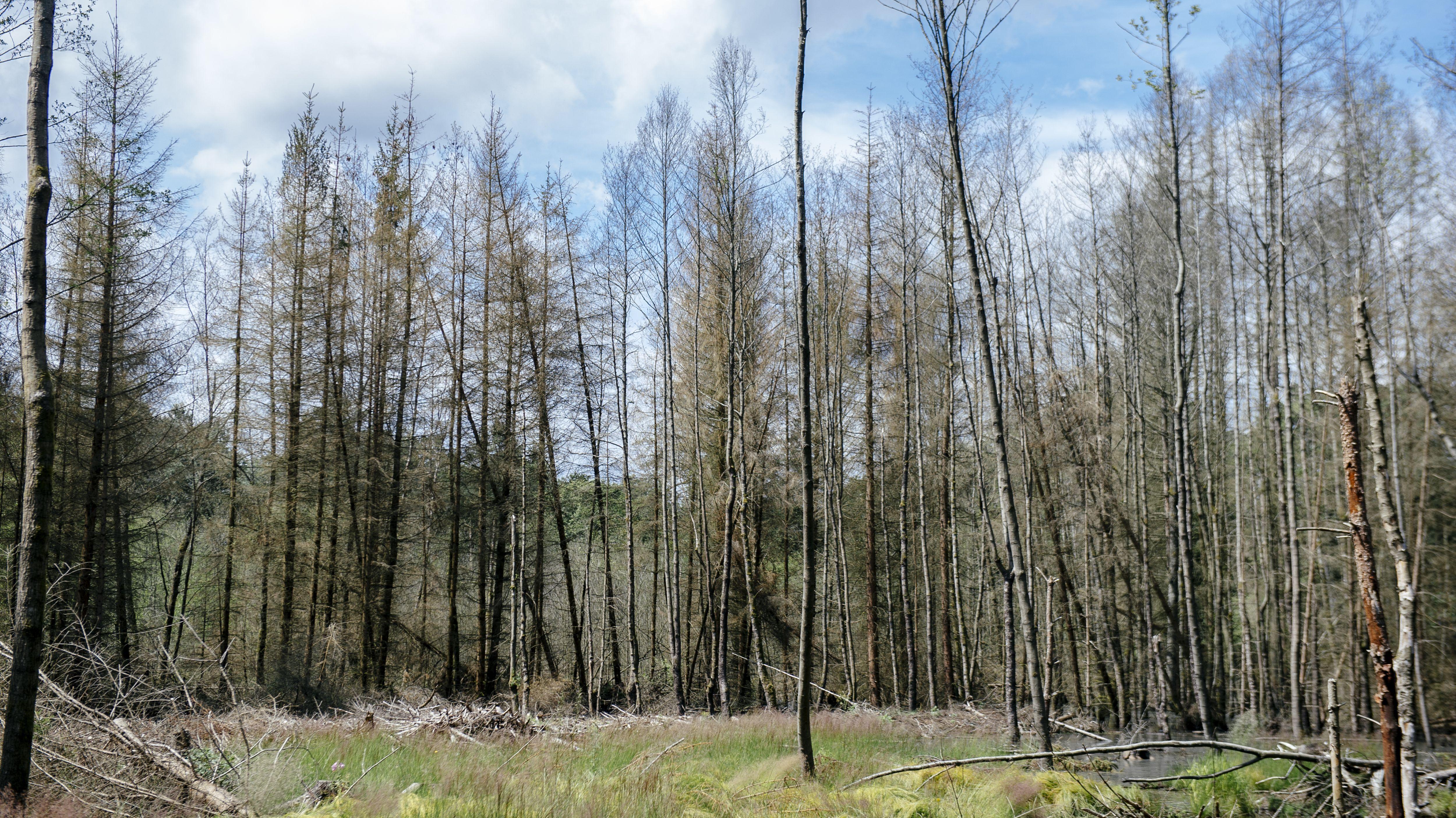 Ein bayerischer Forst, aufgenommen im Jahr 2016.