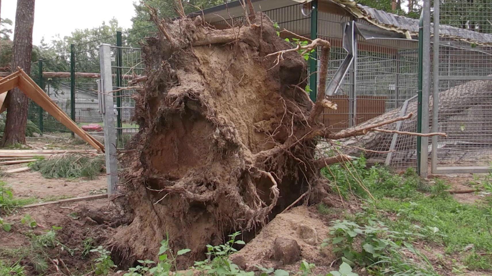 Sturmschäden im Tierheim Roth