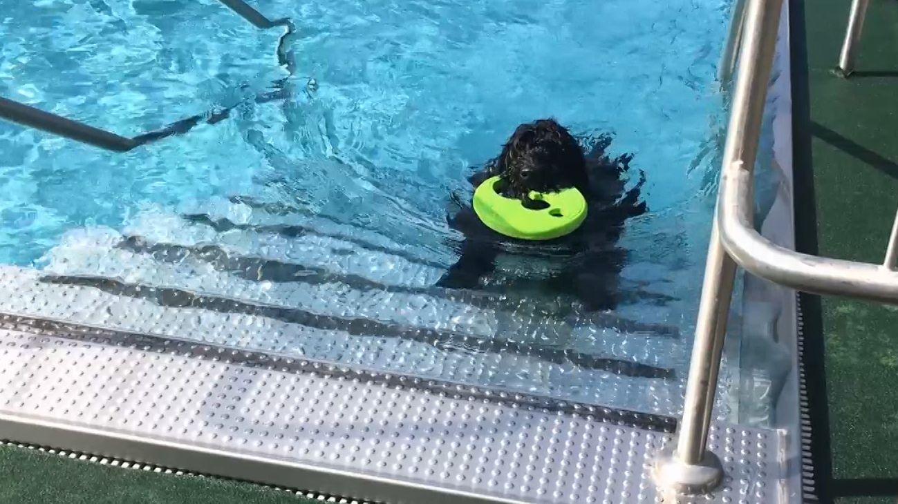 Hundebadetag - der Schwimmer hier apportiert.