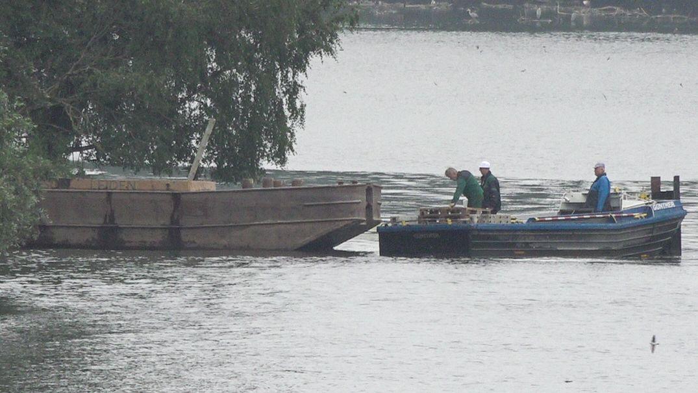 Experten im Boot auf dem Wöhrder See