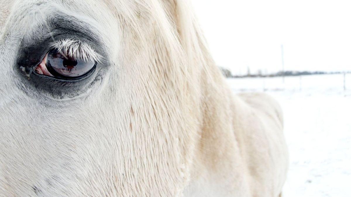 Symbolbild: Pferd auf Koppel