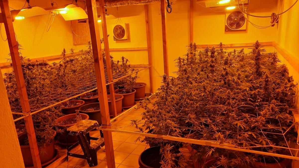 Eine professionelle Marihuana-Aufzuchtanlage im Keller eines Einfamilienhauses in Landau