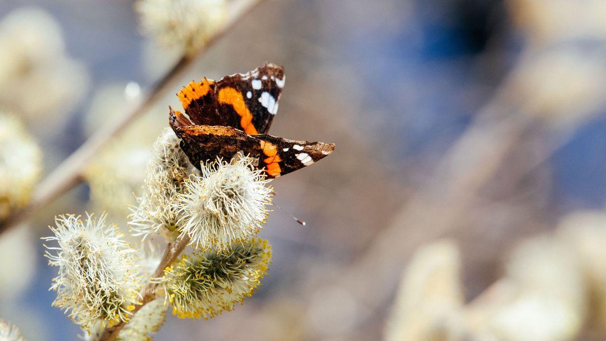 Dieses Mal liegt der Schwerpunkt der Zählaktion auf Schmetterlingen