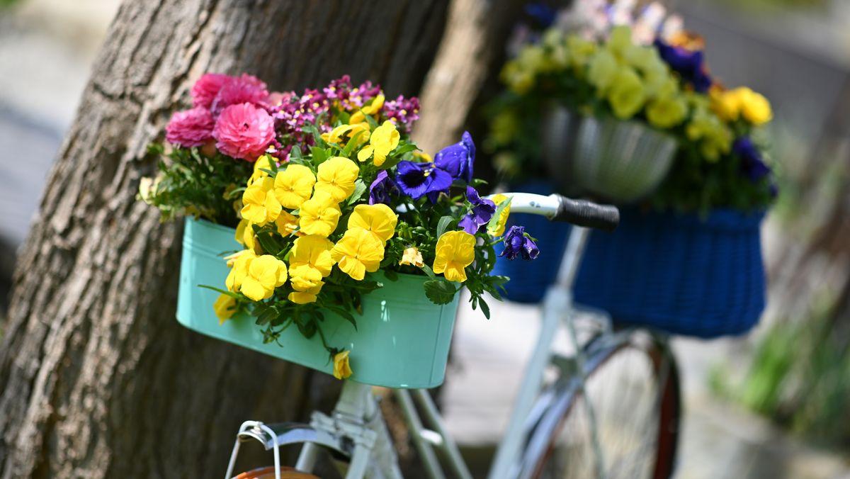 Ein mit Blumen geschmücktes Fahrrad lehnt an einem Baum.