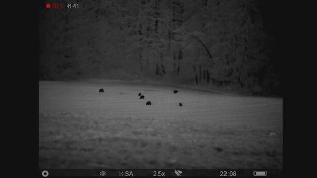 Blick durch ein Nachtsichtgerät auf eine Wildschweinrotte