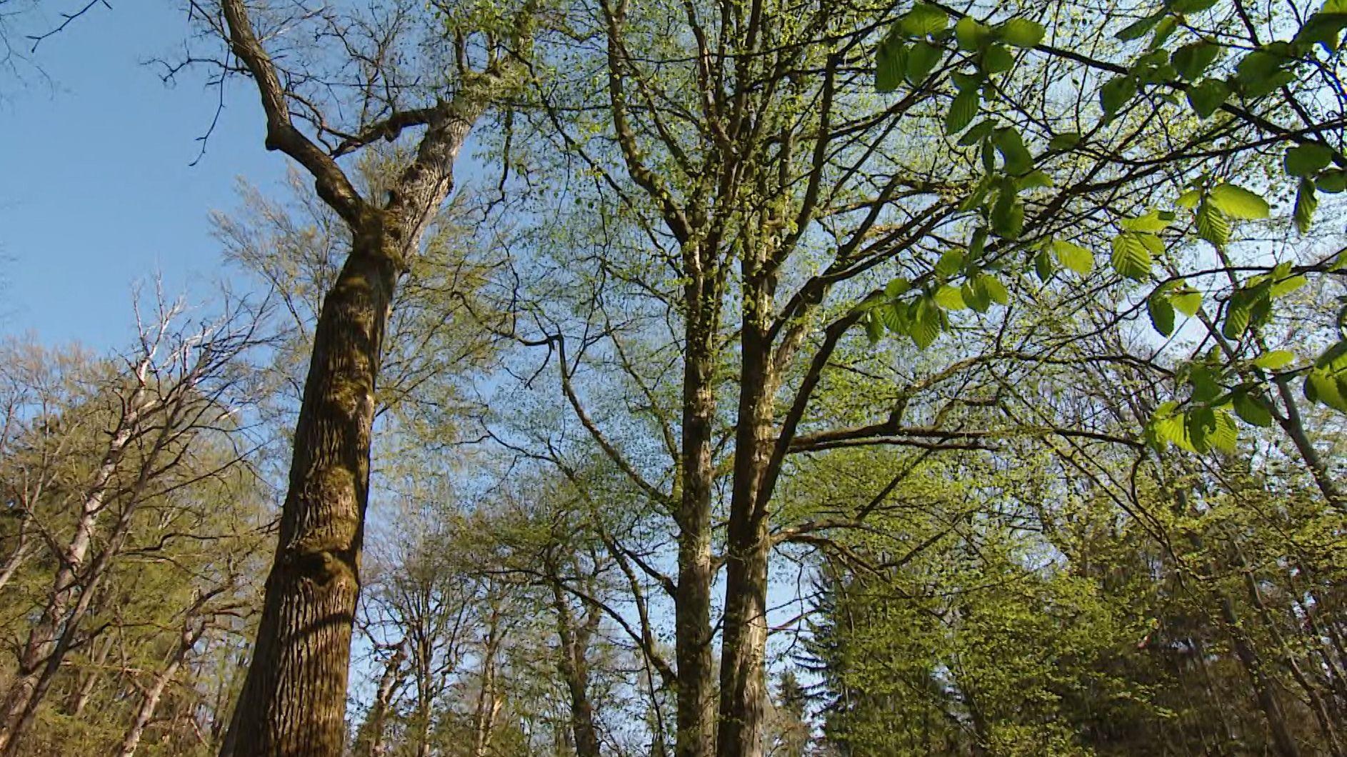 Ein Waldstück in Unterfranken