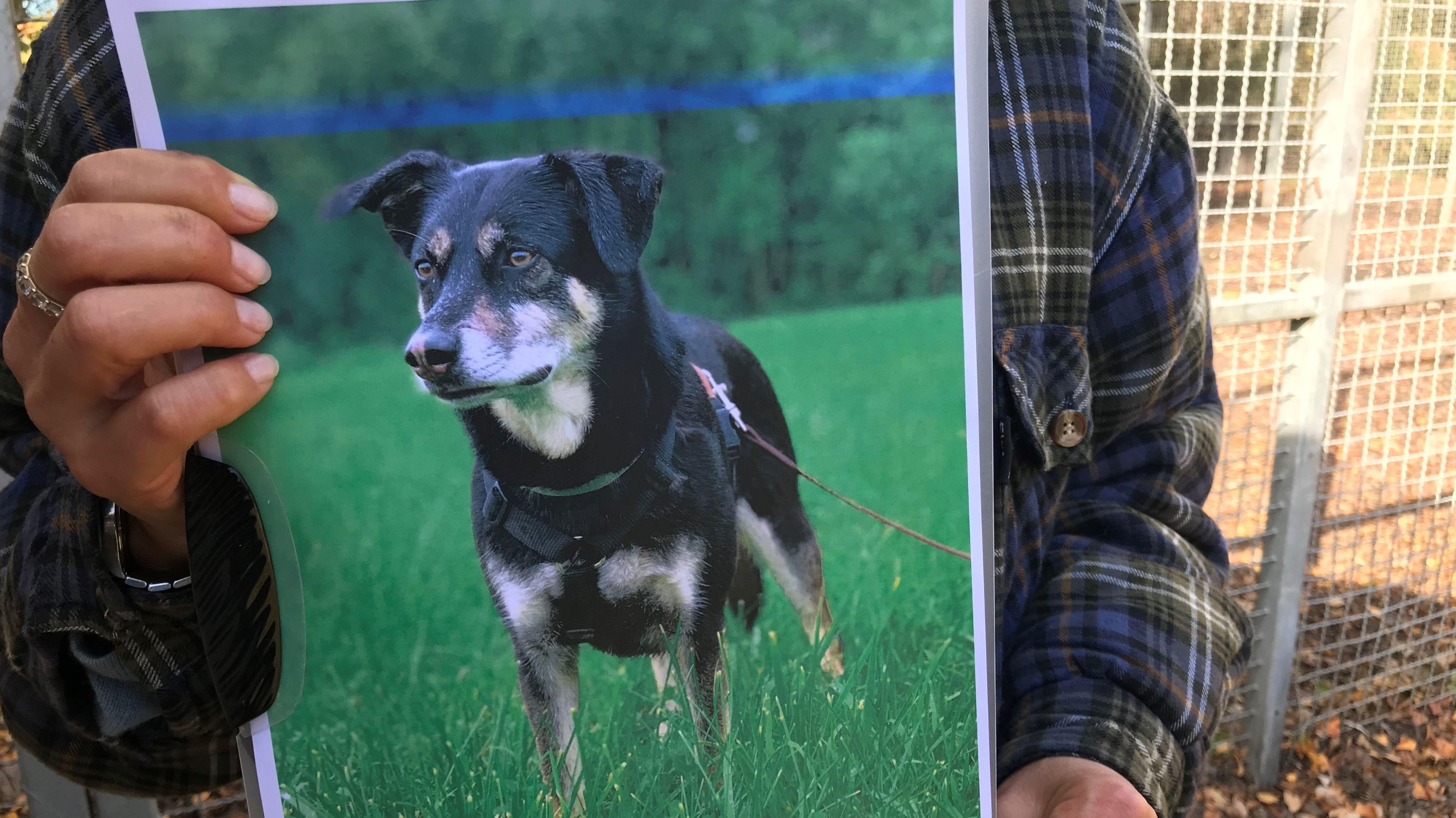 Hund Armani wurde durch Giftköder getötet.