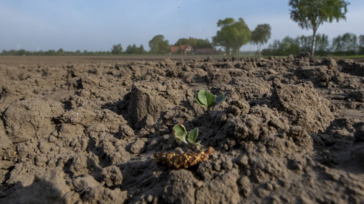 Bauernverband fordert Sonderregelung für Frankens Trockengebiete
